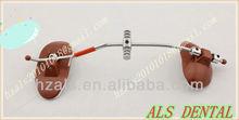 mascarilla dental / de los sombreros de tracción inversa