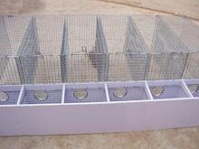 Anping galvanized Mink cage