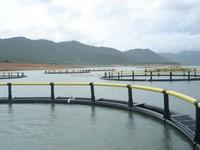 storm resist fish cages