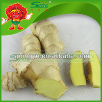 2015 Hotsale youth Ginger pickled ginger price per ton