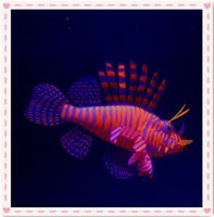 Moon Artificial Silicone Lion Fish Lionfish Snailfish for Aquarium Fish Tank Decoration Ornament