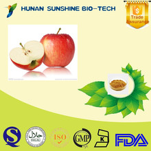 Natural Green Apple Extract Polyphenol Apple fruit extract powder