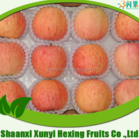 2015 new crop chinese fresh apple fuji from Shaanxi Province