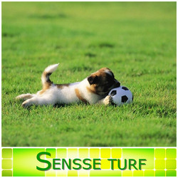Durable waterproof artificial turf for dog run