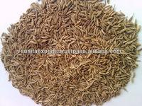 Spices like Cumin Seeds