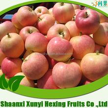 fresh honey chinese red gala apple 2015 crop