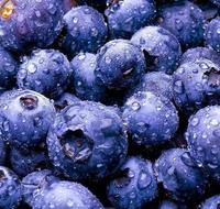 antioxidant keeping slim Acai Berry Extract