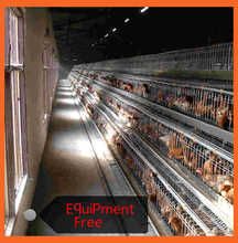 Layer Chicken House Poultry Broiler For Sale Marchioro Cages For Chick