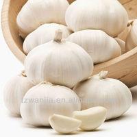 Hot sale fresh garlic