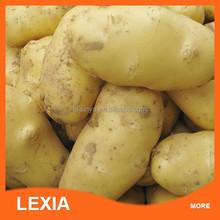 2015 new arrival fresh organic potatoes