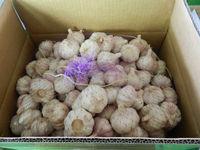 2014 Garlic Price , New Garlic from China in carton