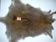 fur skins wallaby