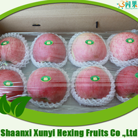 High quality fresh apple fruit importers wholesale price