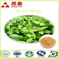 100% Natural Fineleaf Schizonepeta Herb Extract Powder Cat Nut Extract