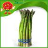 Competitive Frozen Green Asparagus Wholesaler Organic Vegetables