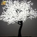 LED árbol de arce