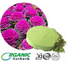 Factory supply 100% natrual orgainc health food kale powder/kale juice powder
