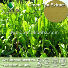 Halal&Kosher Super Green Tea Extract Plant Extraction/Best Green Tea Extract 95% EGCG Powder