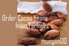 Cocoa beans direct export from Farmers