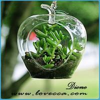 Bubble Terrarium Hanging Glass Apple for Plant Holder VI