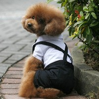 Wholesale price brand name clothing pet coats dog clothes