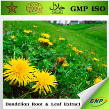 manufacture supply natural dandelion extract