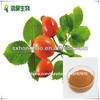 /p-detail/De-alta-calidad-de-extracto-de-rosa-mosqueta-rosa-polifenoles-5-50-300000620052.html