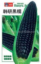 Negro híbrido ceroso semilla de maíz glutinoso de semillas de maíz para la siembra- negro ceroso