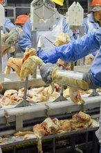 Halal Frozen Chicken Leg Quarters