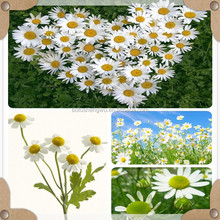 high quality chamomile extract/high quality chamomile flowers extract/organic chamomile extract