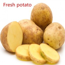 Supply high quality and lower price of fresh potato