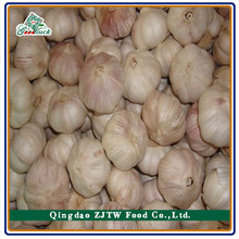 Fresh Fruits and Vegetables From Chinese Fresh Garlic