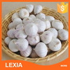 Common Cultivation Type natural garlic