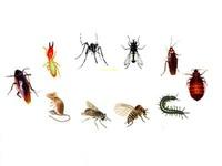 Bifenthrin termite control talstar insecticide