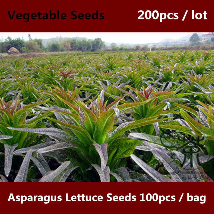 Салат спаржевый выращивание из семян 44