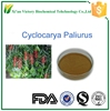 Green nutural Cyclocarya paliurus leaf powder