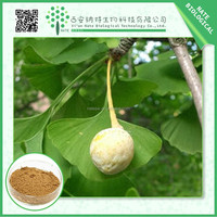 100% pure natural Ginkgo biloba extract 24%6% by HPLC