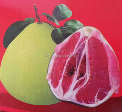 Red honey pomelo fruit new crop 2015