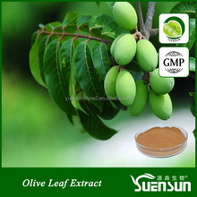 High quality pure natural olive leaf extract / oleuropein 25%