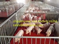 Hot sale! pig feeding farming stall equipment , pig cage ,pig farrowing cage