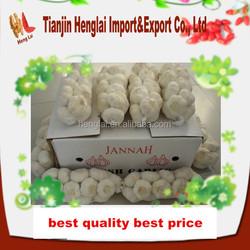 buy nature white garlic size 5 5.5cm
