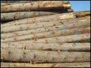 EASTERN CANADIAN CEDAR WOOD LOGS