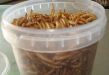 100% natural microwave dried mealworms of bulk fish food