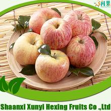 high quality fuji apple/china juicy apple holder