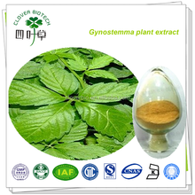 gynostemma pentaphyllum extract/jiaogulan gynostemma pentaphyllum