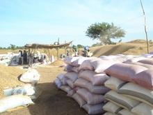 Groundnut from SENEGAL (3AP)