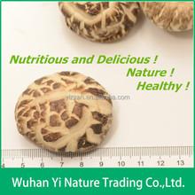 Drying Mushroom,Shiitake Mushrooms from China