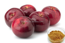 Top grade & low price china manufacturer apple extract/polyphenols
