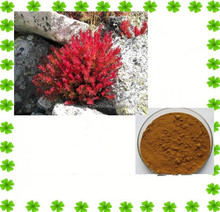 100% Natural Tibetan Herb Rhodiola Rosea Extract