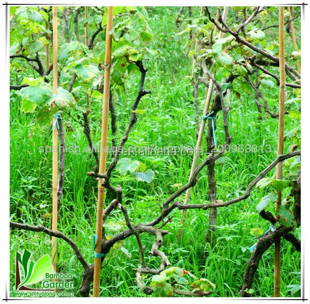 Small Bamboo Sticks ~ Thin bamboo sticks buy small